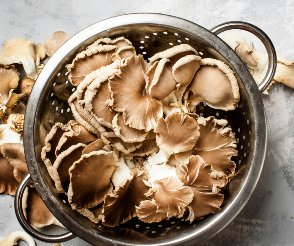 The following recipes for oyster mushrooms fit all kinds of dietary preferences and tastes. There are many different ways to prepare oyster mushrooms: roast, saute and fry. It is also a great meat substitute for those who want to enjoy a good plant-based recipe.